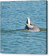 No Snook Limit For This Guy Acrylic Print