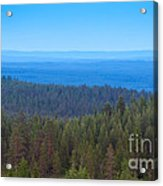 Nordic Forest Acrylic Print
