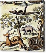 North America: Fauna Acrylic Print