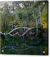 North Florida River Reflections Acrylic Print