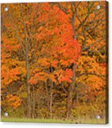 Northeast Fall Colors Acrylic Print