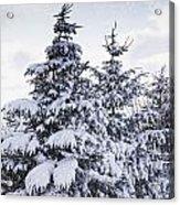 Northumberland, England Snow-covered Acrylic Print