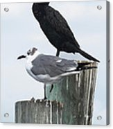 Not Birds Of A Feather Acrylic Print