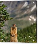 Not Much...whatz Up With You? Acrylic Print