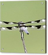 Dragonfly - Not Wilbur's And Orville's Idea Was It Acrylic Print