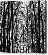November Wood Acrylic Print