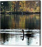 November's Dance Acrylic Print