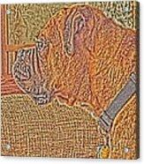 Nuge Art Acrylic Print