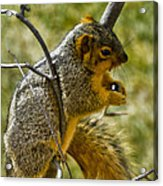 Nuts And Seeds Make A Great Lunch Acrylic Print