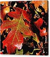 Oak Colors Acrylic Print by Darryl Gallegos