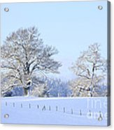 Oak In Snow Acrylic Print