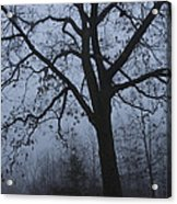 Oak In The Fog Acrylic Print