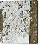 Oak In The Snow Acrylic Print