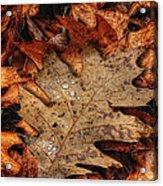 Oak Leaf 1 Acrylic Print