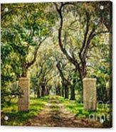 Oak Tree Lined Drive Acrylic Print