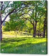 Oak Trees In The Spring Acrylic Print