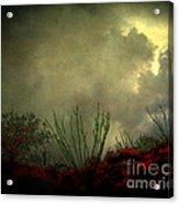 Occotillo And Desert Storm Acrylic Print