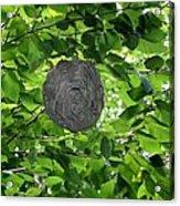 Occupied Bee Hive Acrylic Print