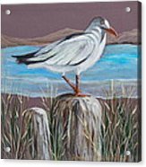 Ocean Sea Gull Acrylic Print by Janna Columbus