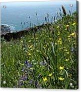 Ocean Wildflowers Acrylic Print