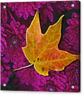 October Hues Acrylic Print by Paul Wear