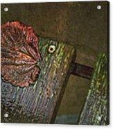 October Portrait Acrylic Print by Odd Jeppesen