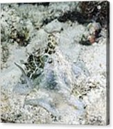 Octopus On The Seabed Acrylic Print by Georgette Douwma