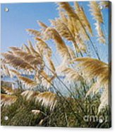 Of Sun And Sky And Wind Acrylic Print