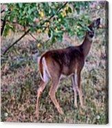 Oh Deer Me Acrylic Print by Myrna Migala