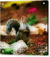Oh I Ate To Many  Nuts Acrylic Print
