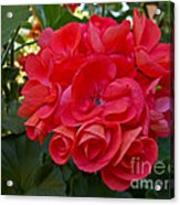 Oh My Red Acrylic Print