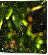Oh The Web We Weave Acrylic Print