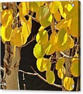 Oh Those Golden Leaves Acrylic Print