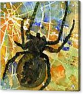 Oh What A Tangled Web We Weave Acrylic Print