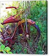 Old Bike And Weeds Acrylic Print