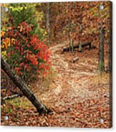 Old Country Road In Shannon County Acrylic Print