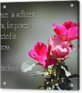 Old Fashion Pink Roses II Cor.12v9 Acrylic Print by Linda Phelps