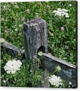 Old Fence And Wildflowers Acrylic Print