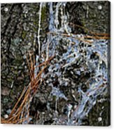 Old Needles And Sap Acrylic Print