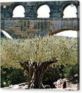 Old Olive Tree Under The Pond De Gard France Acrylic Print