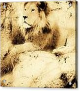 Old Photograph Of A Lion On A Rock Acrylic Print