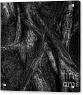 Old Silvery Roots Acrylic Print