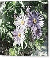 Old Style Flower 7 Acrylic Print