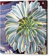 Old Town Cactus Acrylic Print