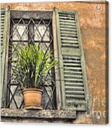 Old Window And A Green Plant Acrylic Print
