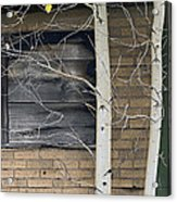 Old Window And Aspen Acrylic Print by James Steele