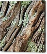 Old Wood And Lichen Acrylic Print