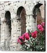 Oleander And Colosseum Acrylic Print