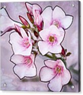 Oleander Blossoms Acrylic Print
