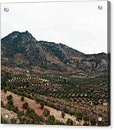 Olive Oil Mountain Acrylic Print